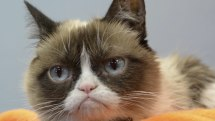 After Math: Goodbye, Grumpy Cat, whoa oh oh