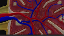 BioDigital Human - 3D anatomy views on iOS