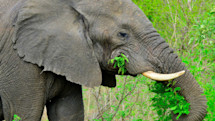 Intel-powered camera uses AI to protect endangered African wildlife
