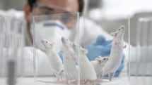 Scientists reverse Alzheimer's-like symptoms in mice