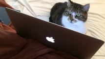 Caturday: Rascal, the web-surfing cat
