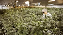 US government wants you to grow weed for science