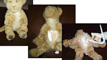 WowWee's Alive Lion Cub dissected, juggled at a Mexican carnival