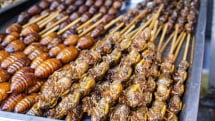 Get ready to eat bugs if you want to live beyond 2050