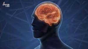 Scientists Just Found the Brain's 'Sleep Switch'