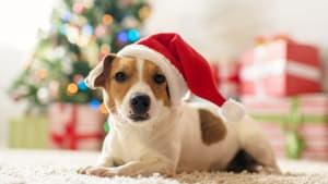 Why Pets Make Bad Gifts