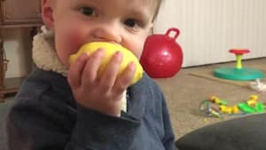 Little Boy Bites into Lemon and Doesn't like It