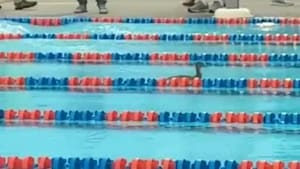 Duck joins in on swim meet competition