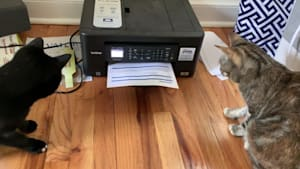 Two curious cats scared of printer