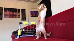 Goalkeeper kitty has incredible reflexes and pulls off some amazing saves