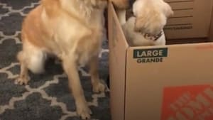This dog is so excited to meet his little sister