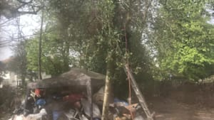 Branch felling goes bad