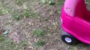 Dramatic toddler yells at fly sitting on toy car