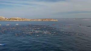 5.500 Schwimmer bei der Monte Christo Challenge