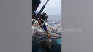 Fishermen rescue two sea turtles trapped in trash