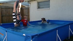 Toddler laughs at dog splashing in pool
