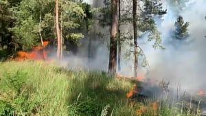 Waldbrand in Brandenburg - Hitze bleibt Deutschland erhalten