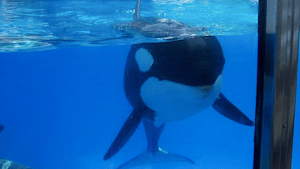 Canada has banned whale captivity