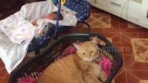 Jealous cat loves to be rocked in like a baby