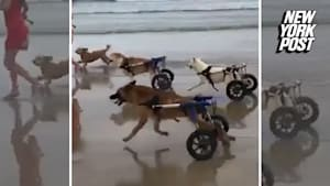 Disabled pups hit the beach for the first time