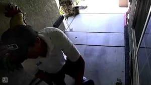 Cat jumps at man riding Segway, causing crash