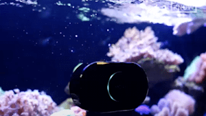 This robot cleans your fish tank for you