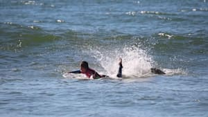 Seagull attacks surfer in the ocean