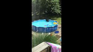 Mom catches black bear playing with toys in pool