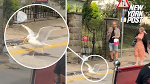 Hilarious seagull grabs sandwich out of man's hand