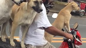 Watch these fearless dogs ride motorcycles