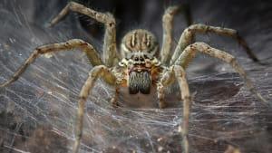 Ihr solltet Spinnen niemals zerquetschen: In ihnen kann eine große Überraschung lauern