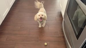 Dog taps paw waiting for owner to play fetch