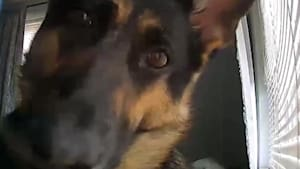 Curious dog gets up close with home security cam