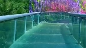 Glass water slide goes under beautiful flowers