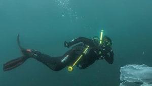 Taucherin zeigt atemberaubende Aufnahmen eines extrem seltenen Meerestiers