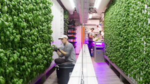 Company grows food inside shipping containers