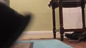 Pug calmly thwarts owner's prank attempt