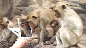 Monkey family admire themselves in mirror