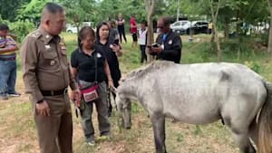 Ponies rescued from being sold as meat on Facebook