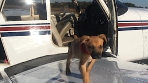 Organization uses helicopters to rescue dogs