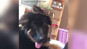 Super funny pup shows hilariously goofy expression