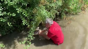 Sheep rescued from canal after heavy rains