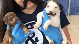 Cute little puppy shows off adorable mustache