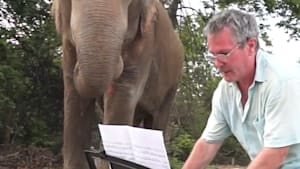 Pianist plays music to comfort abused elephants