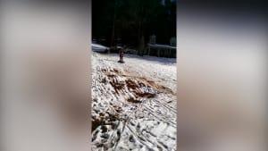 Sled surfing mud slide