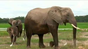 Hilfe für Elefanten: Artenschutzkonferenz in Genf