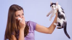 Katzenallergiker aufgepasst: Ein neues Medikament macht Schluss mit eurer Allergie!