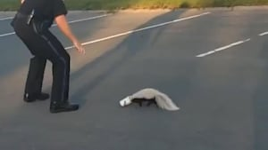 Cop rescues skunk, gets sprayed in the process