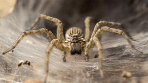 Seit der Klimaerwärmung: Spinnen werden aus bestimmtem Grund immer aggressiver
