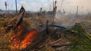 Brasilien: Spagat zwischen Umweltschutz und wirtschaftlicher Entwicklung